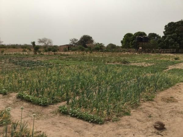 Sintet Farm